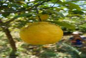 images/Photos-Excursions/citron-domaine-de-florette.jpg