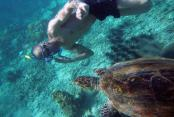 images/Photos-Excursions/snorkeling-a-tanikely-tortue.jpg